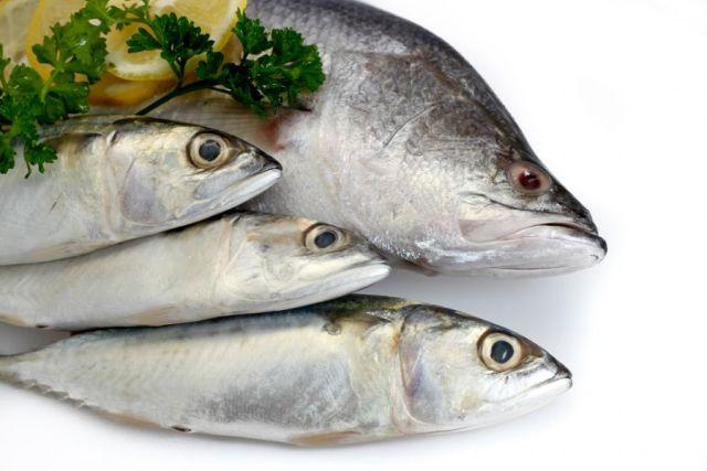 DOMUS 24® Apoio Domiciliário - Alimentos Antioxidantes -  Peixes Gordos