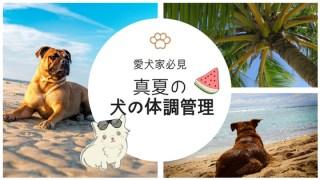 夏の犬の体調管理