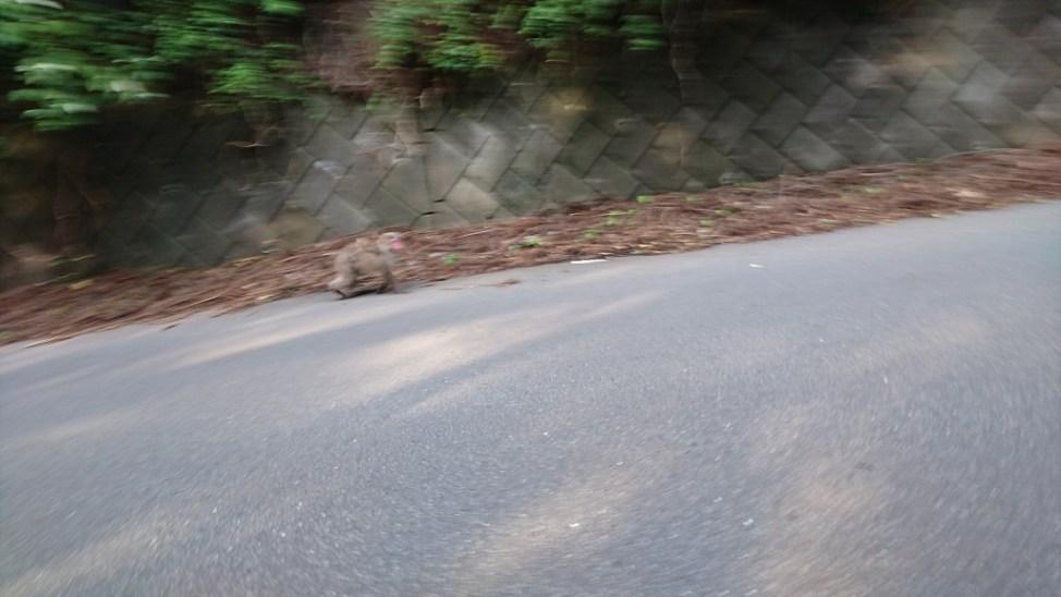 三峯神社近くで見かけた親子猿