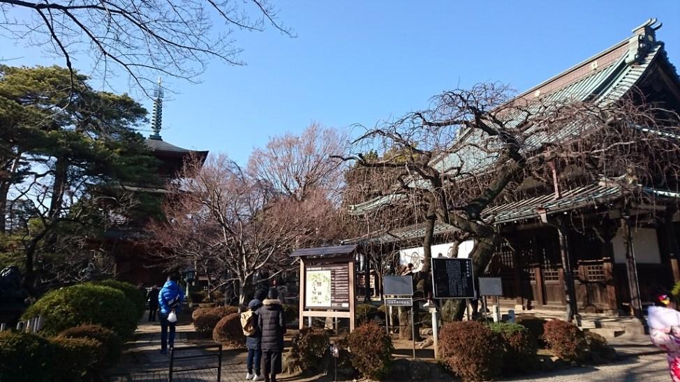 豪徳寺の三重塔と仏殿