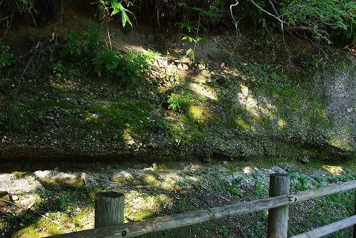 貝子沢化石公園 化石
