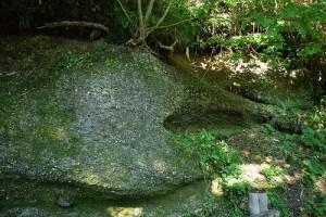 貝子沢化石公園 貝だらけ