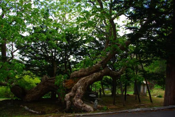栃の木さん