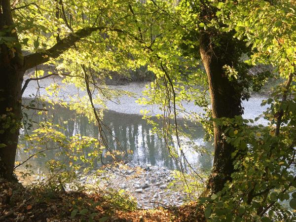 Zahlreiche Schotterinseln, Schotterbänke, Altarme und Auwaldreste charakterisieren die freie Fließstrecke der Donau in der Wachau. Bedingt durch die ökologischen Schotterstrukturen und die renaturierten Donauarme z. B. bei Schönbühel, Aggsbach Dorf und Rossatz-Rührsdorf wird der artenreiche Fischbestand in der Wachau gefördert. So können in dem wellenschlaggeschützten Seichtwasser der Nebengewässer der Donau, Jungfische besser überleben.