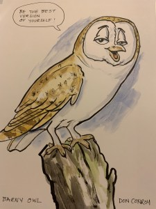 Best Version Barn Owl