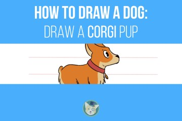 How To Draw a Dog - Draw a Corgi Pup Step by Step