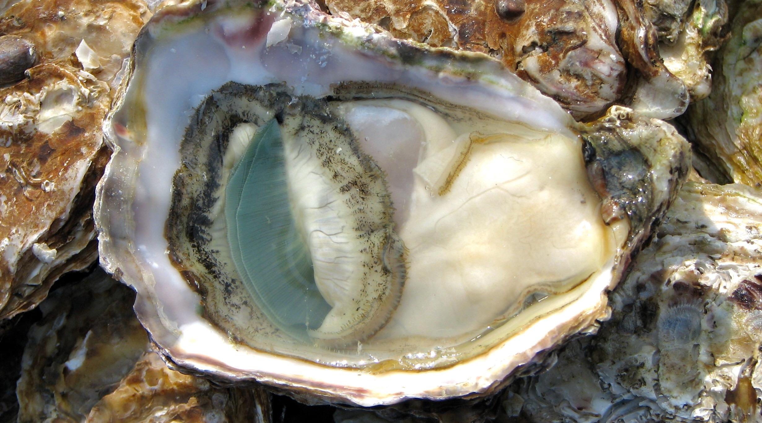 Oyster as aphrodisiac