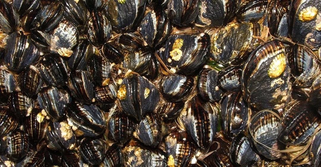 Vinos+Tapas. A San Miguel restaurant flexes its mussels.