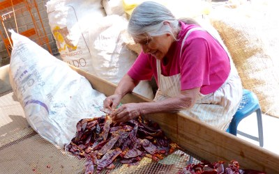 Chile peppers. The guide to the dried.