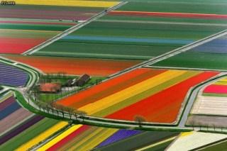 Campos de tulipanes, Holanda. EUROPA