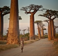 Avenida de los Baobabs, Madagascar AFRICA