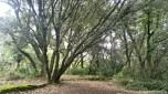 Grandes árboles inundan este bellísimo lugar
