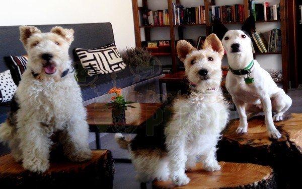 el hotelito 3 perritos