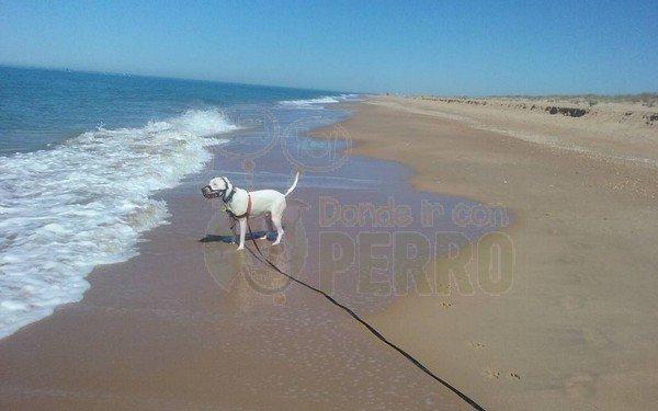 playa espigón (1)