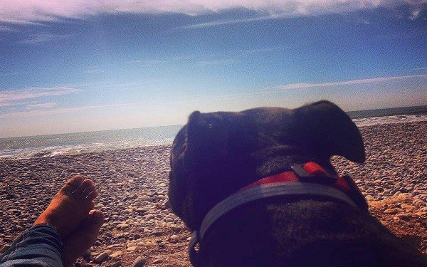 dogs&waves (10)