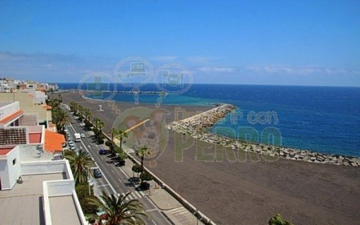 Playas para perros en Canarias