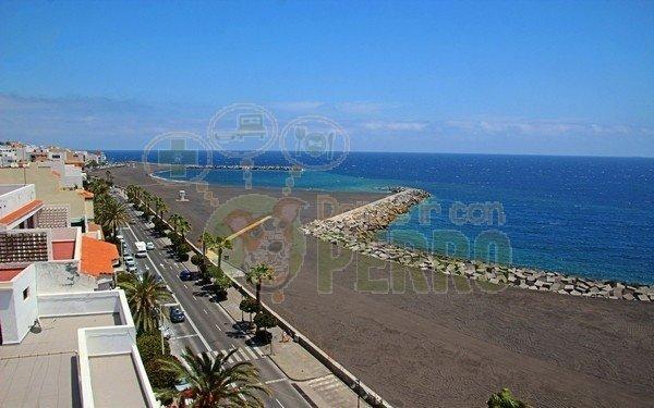 playa de santa cruz de la palma admite perros en Canarias