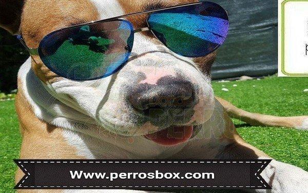 cajas para perros personalizadas