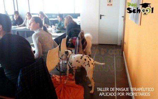 dogschool (4)