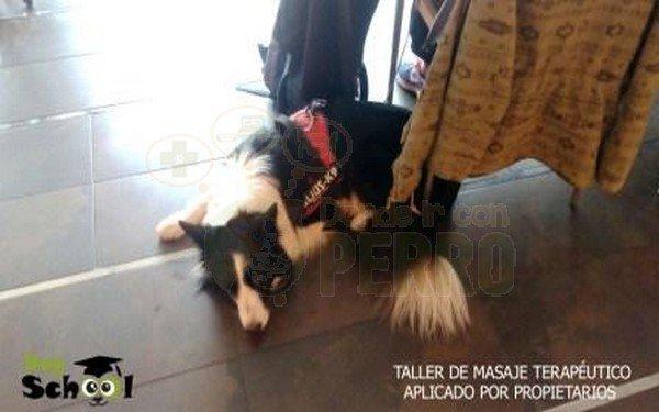 dogschool (6)