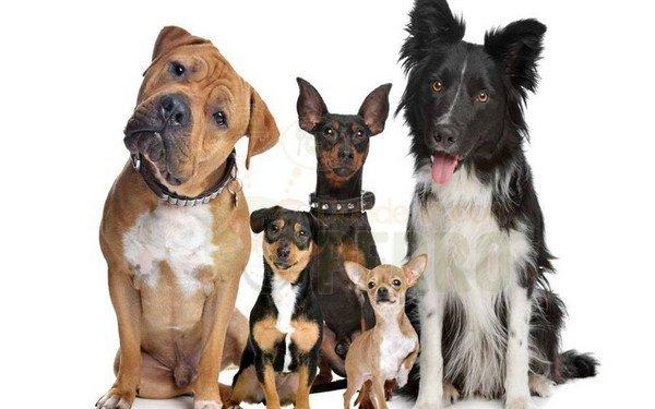 Seguro para mascotas con muy buena cobertura y precio y descuentos