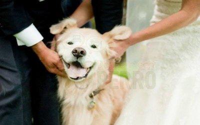 Empresas que pagan los seguros de mascotas a sus empleados