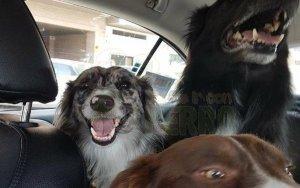 taxiguau transporte de perros en taxi en Zaragoza