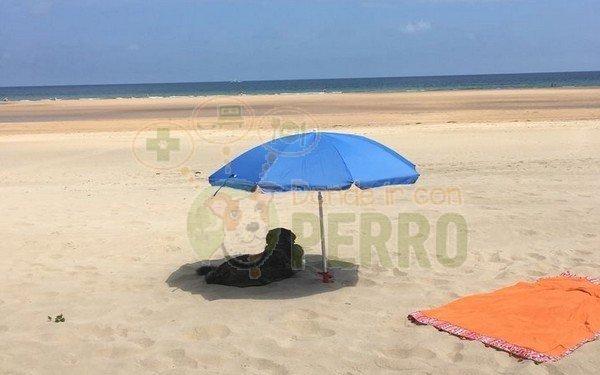 playa de Trengandín (3)