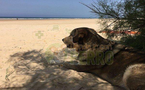 Viajar con mascotas. Información gobierno de España