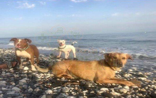 playa de torrox (1)