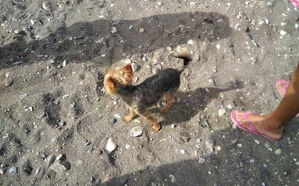 playa de torrox (7)