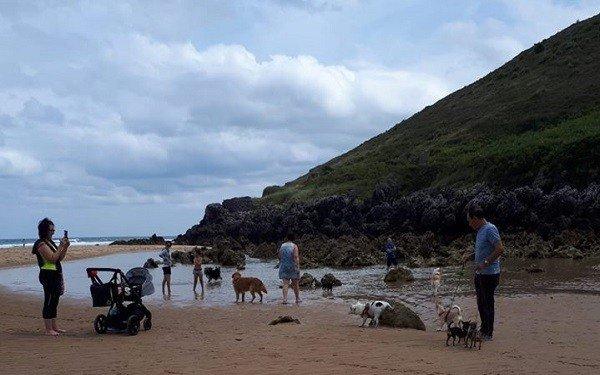 playa canina en Noja