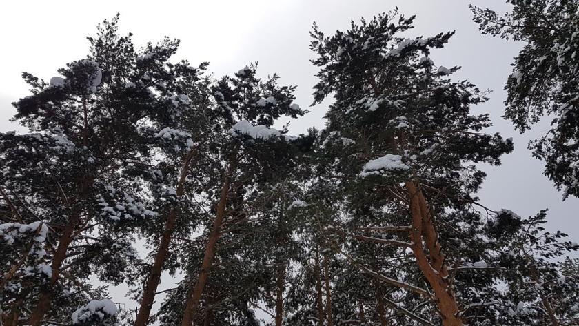 20160117_144526 (Copy) nieve