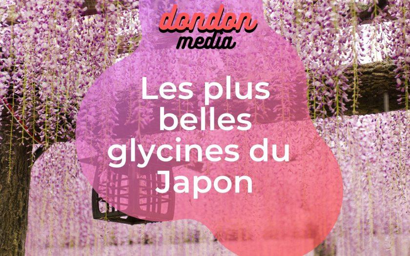 Les plus belles glycines du japon