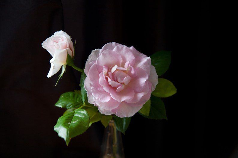the last rose - image by Deb Fletcher