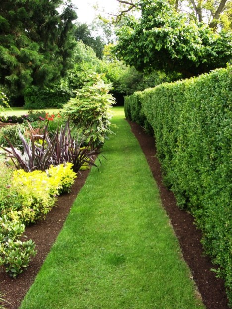 peter donegan landscaping ltd - formal hedge