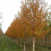peter donegan landscaping ltd - trees