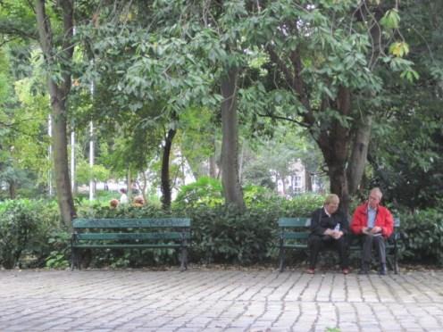 trees dublin (2)