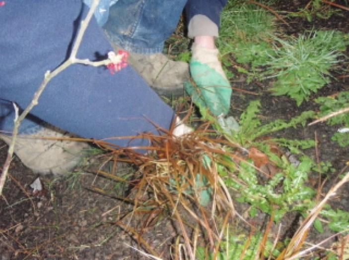 peter donegan swords dublin ireland garden grounds maintenance