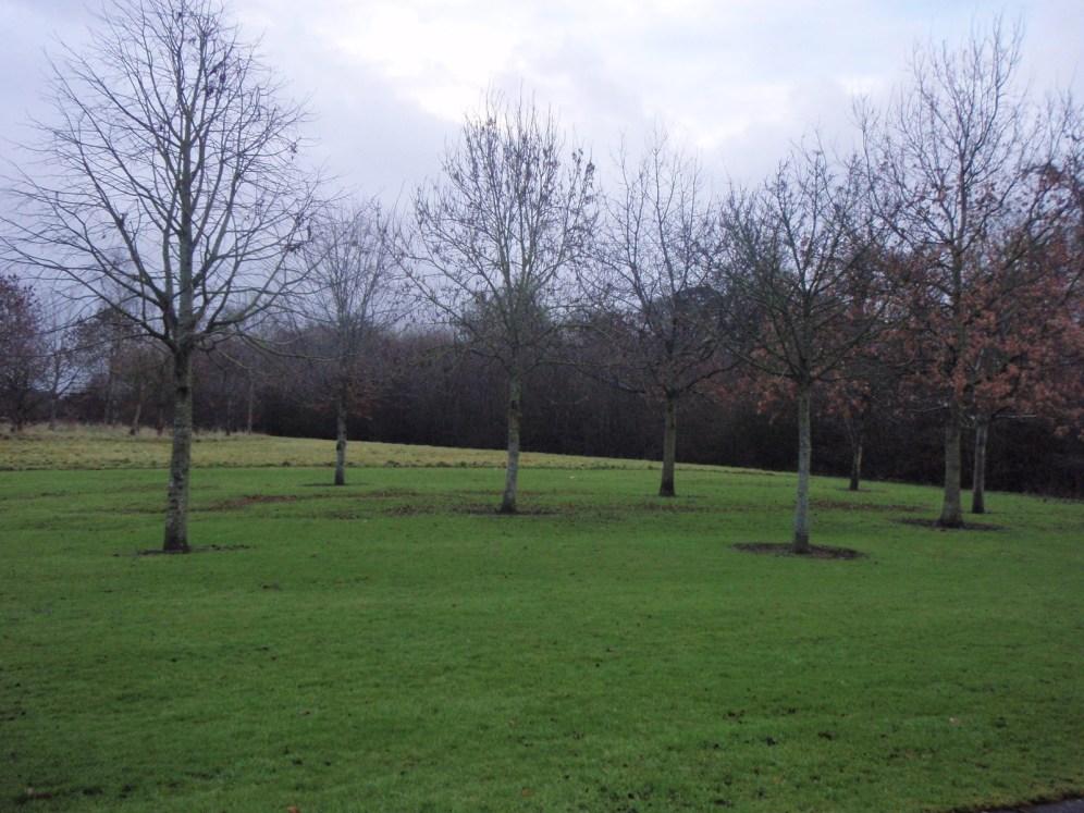 peter-donegan-landscaping-ltd-file-082