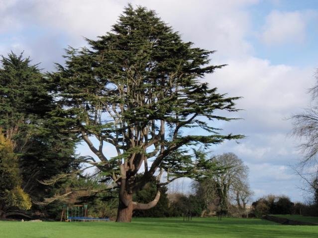 large-tree1