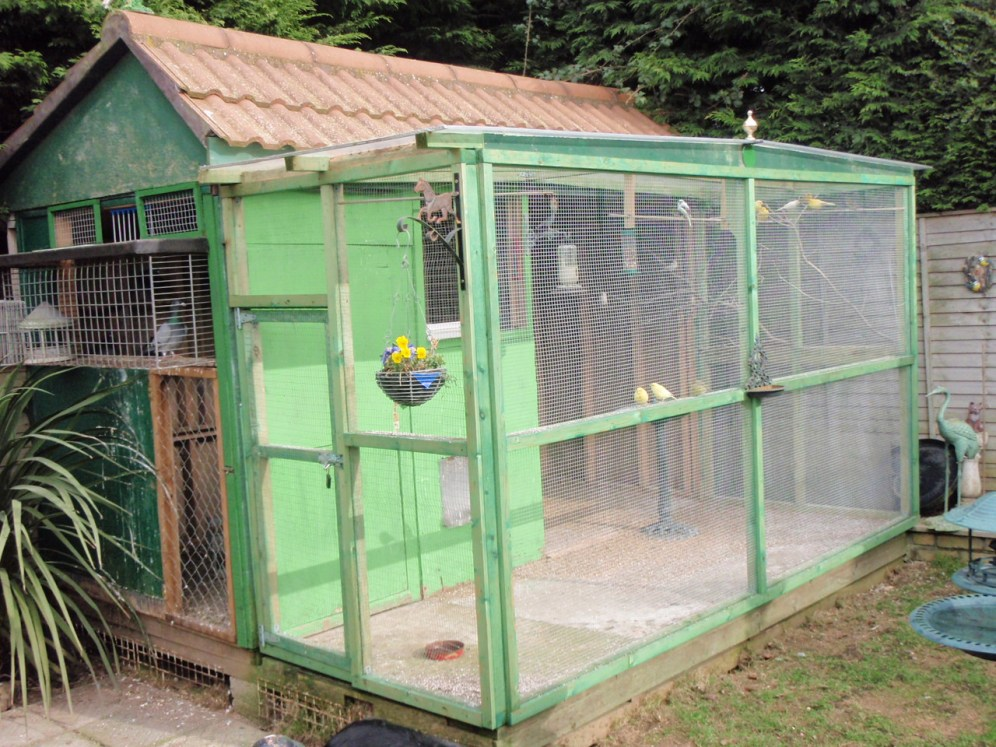 domestic chicken coup