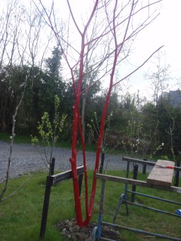 paint a dead tree red