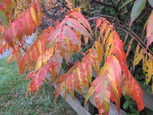 autumn-colour-11