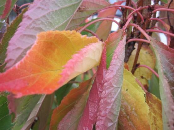 autumn-colour-24