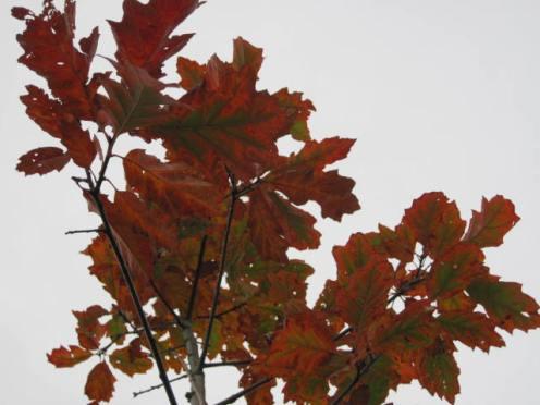 autumn-colour-42