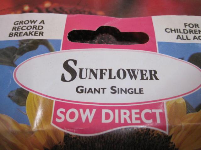 helianthus-sunflower-seed-001