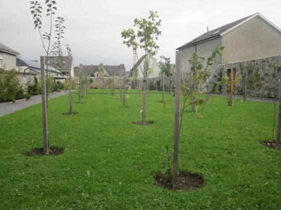 rothe-house-gardens-kilkenny-6