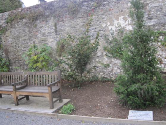 rothe-house-gardens-kilkenny-9