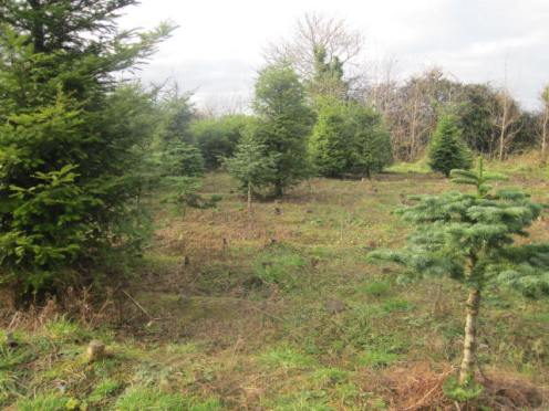 christmas-tree-farm-13